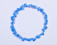 Blue forget-me-not flowers arranged on a circle Stock Photos