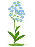Blue forget-me-nots. On a white background stock illustration