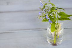 Blue forget me nots in a transparent vase on a wooden background. Template for creative projects Royalty Free Stock Photo
