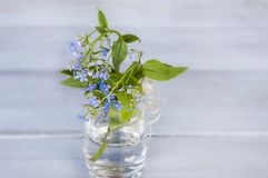 Blue forget me nots in a transparent vase on a wooden background Stock Images
