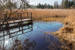 Blue fount in the swamp, tourist attraction osterseen Royalty Free Stock Photography
