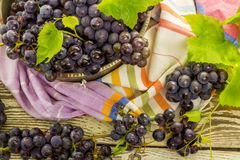 Blue fresh grapes in old metal bowl Stock Image