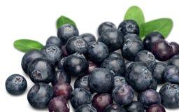 Fresh Ripe Blueberries on white background. Blue fresh ripe blueberries close up color white Royalty Free Stock Image