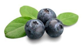 Fresh Ripe Blueberries on white background. Blue fresh ripe blueberries close up green color Stock Photos