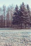 Blue frosty morning in the park Royalty Free Stock Image