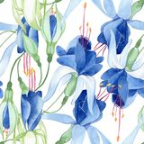 Blue fuchsia. Floral botanical flower. Watercolour drawing fashion aquarelle isolated. Seamless background pattern. Blue fuchsia foral botanical flower. Wild vector illustration