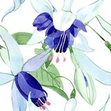 Blue fuchsia floral botanical flowers. Watercolor background illustration set. Seamless background pattern. vector illustration