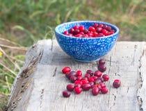 Blue full  plate Cornelian cherries Royalty Free Stock Images