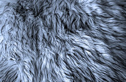 Blue fur. Fur texture background, toned in blue Stock Photos