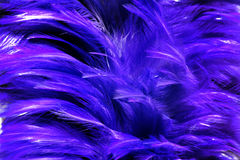 Blue fur from feather Stock Photography
