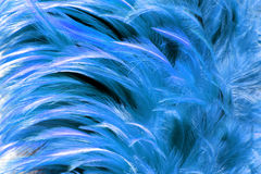 blue fur from feather Royalty Free Stock Photography