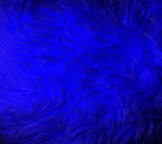 Blue fur macro Royalty Free Stock Photo