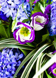Blue fuzzy (hyacinthus orientalis) bouquet Royalty Free Stock Image