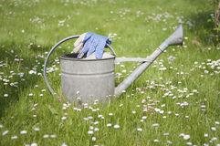 Blue garden gloves on metal watering can Stock Image