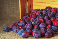 Blue garden plums in a wooden box on background of jute Royalty Free Stock Images