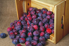 Blue garden plums in a wooden box on background of jute Stock Photography