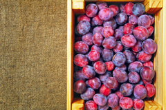 Blue garden plums in a wooden box on background of jute Stock Photos