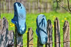 Blue Garden Shoes. Of crocs style in wood fence Stock Photography