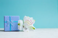 Blue gift box with single alstroemeria flower on mint background Royalty Free Stock Photos