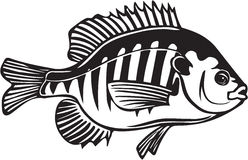 Blue Gill Illustration. Line Art Illustration of a Blue Gill Royalty Free Stock Image