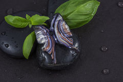 Blue glass butterfly on the black stones with basil leaves Stock Image