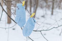 Blue gloves on clothespins. In the forest Stock Images