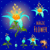 Blue glowing magic flowers, stages of flowering Stock Photography