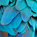 Blue and Gold Macaw feathers Stock Images
