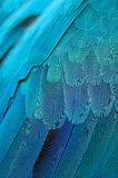 Blue and Gold Macaw feathers Royalty Free Stock Image