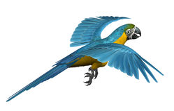 Blue and Gold Macaw Flying. 3D render of a blue and gold macaw flying Royalty Free Stock Photos
