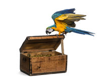 Blue-and-gold Macaw isolated on white Stock Photos