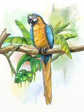 Blue and gold macaw. With some tropical vegetation. Original digital watercolor Stock Images