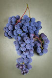 Blue grape Stock Photography