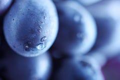Blue grape cluster Stock Image