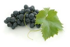 Blue grape cluster Stock Photography