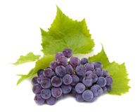 Blue grape cluster with leaves Royalty Free Stock Images