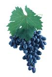 Blue grape cluster with leaves Stock Photos