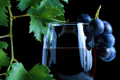 Blue grape cluster and red wine Royalty Free Stock Photos
