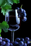 Blue grape cluster and red wine Royalty Free Stock Photography