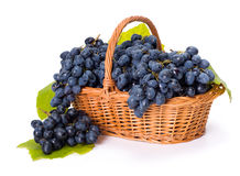 Blue grape clusters in basket. After harvest royalty free stock photography
