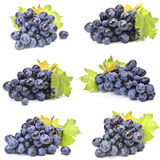 Blue grape Stock Photo