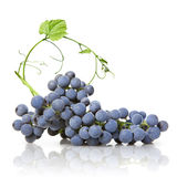 Blue grape with green leaf isolated. On white royalty free stock photos