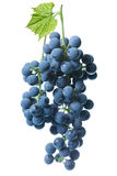 Blue grape with green leaf isolated Stock Images