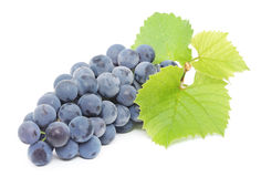 Blue grape with green leaves Royalty Free Stock Image
