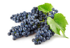 Blue grape with green leaves isolated fruit Royalty Free Stock Photography
