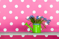 Blue grape hyacinths on pink Royalty Free Stock Image