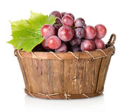 Blue grape with leaf Stock Image