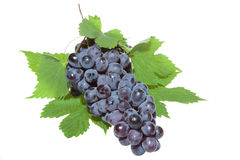 Blue grape with leafs Stock Image