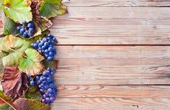 Blue grape Royalty Free Stock Photo