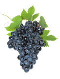 Blue Grape With Leafs Stock Images